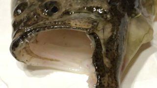 ダイソー・ジグロックで人生初のヒラメを釣ってきましたょ